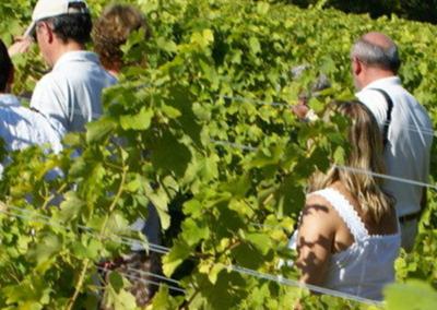 Musée de la Vigne et du Vin d'Anjou