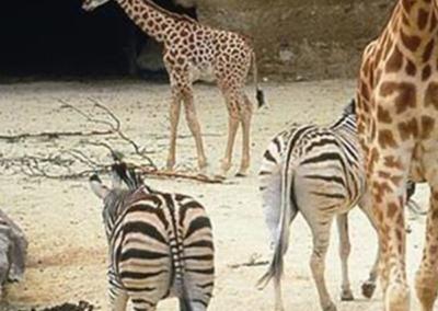 Zoo Bioparc de Doué